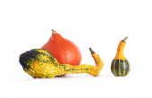Gourd family. — Stock Photo