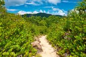 Footpath in tropical nature — Stock Photo