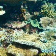 Giant clam at the tropical coral reef — Stock Photo #68696563