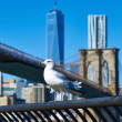 Seagull over Manhattan background. — Stock Photo #71406063