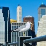 Seagull over Manhattan skyline — Stock Photo #71406155