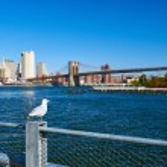 Seagull over Manhattan skyline — Stock Photo #71406209