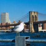 Seagull over Manhattan skyline — Stock Photo #71406281