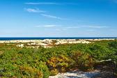 Landscape at Cape Cod — Stock Photo