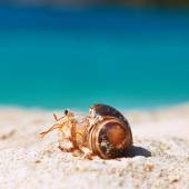 Hermit crab on beach — Stock Photo