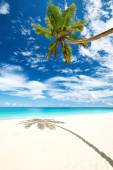 Beautiful beach Anse Intendance — Стоковое фото
