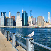 Seagull over Manhattan skyline — Stock Photo