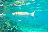 Coral reef and fish — Stock Photo