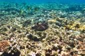 珊瑚和鱼 — 图库照片