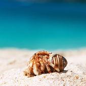 Hermit crab at beach — Stock Photo