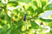 Dev ağaç örümcek — Stok fotoğraf