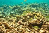 Coral reef and fishes — Stock Photo
