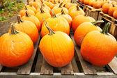 Pumpkins for sale on market — Stock Photo