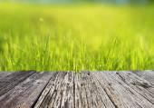 Green meadow in sunlight — Stock Photo