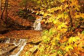 Autumn scene of waterfall — Stock Photo