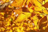 Autumn yellow leaves background — Stock Photo