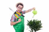 Funny man trimming plans in his garden — Stock Photo