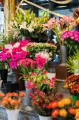 Street flower shop with colourful flowers — Stock Photo