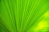 Texture of green leave for your background — Stock Photo