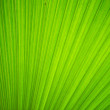 Texture of green leave for your background — Stock Photo #54433705