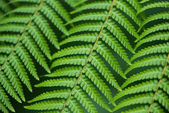 Close up of fern leaves — Stock Photo