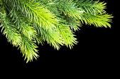 Christmas tree isolated on the black background — Stock Photo