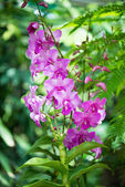 Colourful orchid flowers on bright summer day — Stock Photo