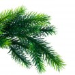 Close up of fir tree branch isolated on white — Stock Photo #57910451