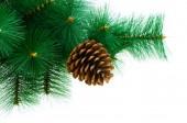 рождественская елка, изолированные на белом фоне — Стоковое фото