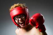 Funny boxer on dark — Stock Photo
