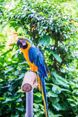 Colorful parrot bird sitting — Stock Photo
