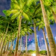 Palms in Singapore during night — Stock Photo #68045167