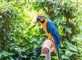 Colorful parrot bird — Stock Photo