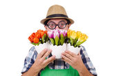Young funny gardener with tulips isolated oin white — Stock Photo