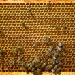 Bees work on honeycomb. — Stock Photo #52773565