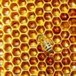 Bees work on honeycomb. — Stock Photo #52773897