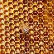 Bees work on honeycomb. — Photo #52773903