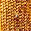Bees work on honeycomb. — Stock Photo #52773905