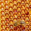 Bee works on honeycomb — Stock Photo #52773975