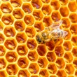 Bees work on honeycomb  — Foto de Stock   #52774001