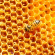 Working bee on honey cells — Stock Photo #52774033