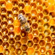 Bees work on honeycomb  — Foto de Stock   #52774045