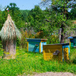 Colored beehives on apiary — Stock Photo #52774095