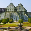 Palm house in Vienna — Stock Photo #52774213