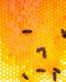 Abelhas em células de mel — Fotografia Stock