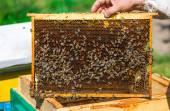 Działa na komórkach miód pszczoły. bliska makro. — Zdjęcie stockowe