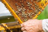 Pracy pszczół plaster miodu — Zdjęcie stockowe