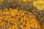 Bees work on honeycomb. — Stock Photo