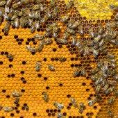 Arbetande bina på honeycomb — Stockfoto
