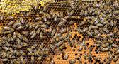 Honung kam och bin — Stockfoto